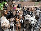 hondenhoroscoop